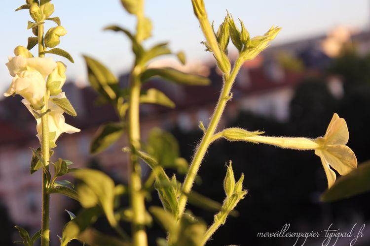 Fleurs-des-champs-8